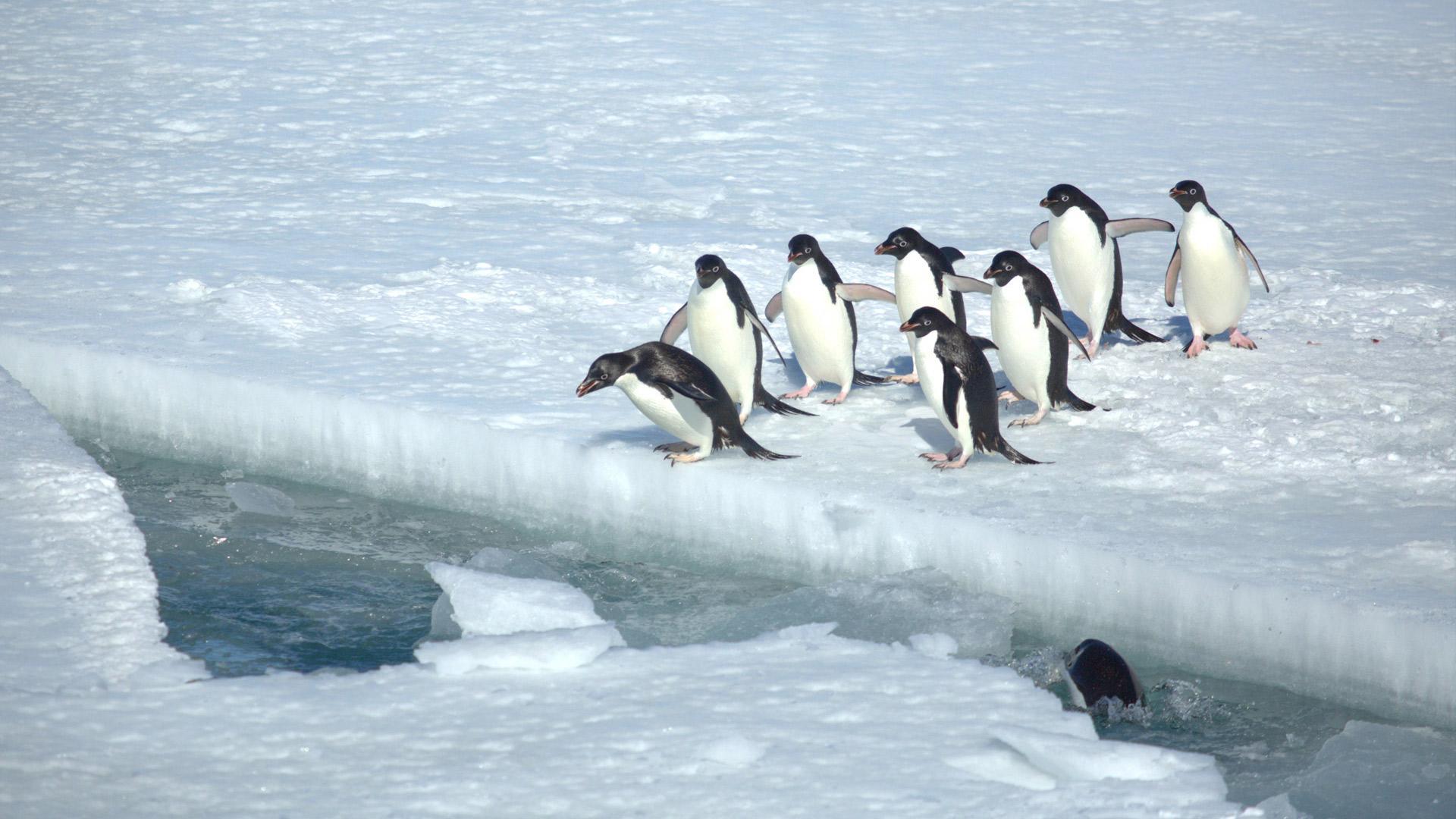 كونتيننت ٧: أنتاركتيكا